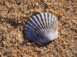 Beach_Provincetown_ab