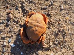 Beach_Provincetown_c4