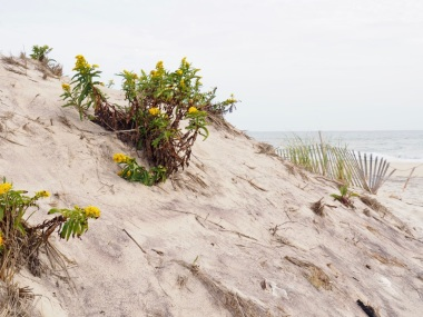 Beaches_Ci1kEtI7QgWo0O%BVZFjqQ_thumb_30bc