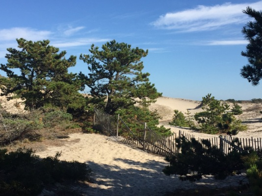 national_seashore_772