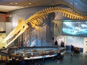 WhalingMuseum79