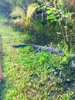 Everglades6