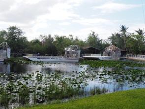Everglades_46d