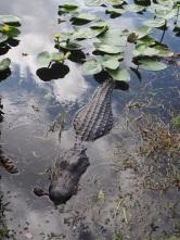 Everglades_46e