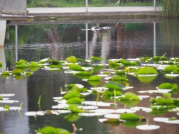Everglades_477