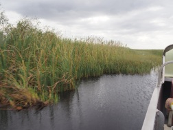 Everglades_484