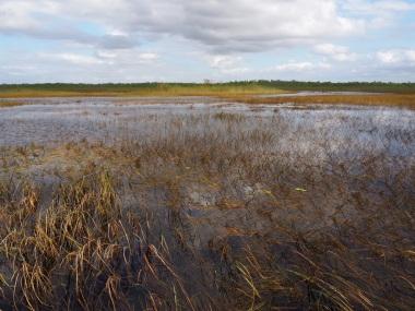 Everglades_495