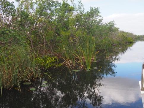 Everglades_4a4