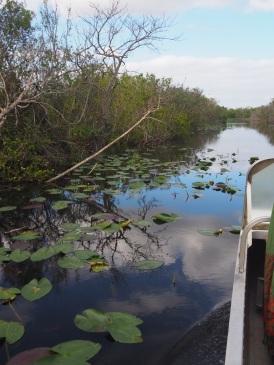Everglades_4a8