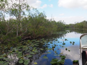 Everglades_4af