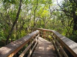 Everglades_4bc