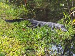 Everglades_4c1