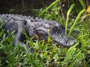 Everglades_4c3