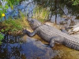 Everglades_4d5