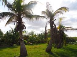Everglades_4d7