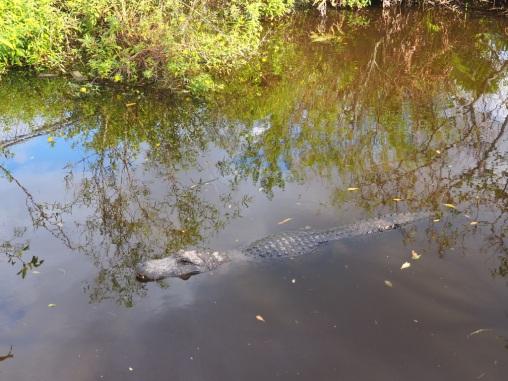 Everglades_4da