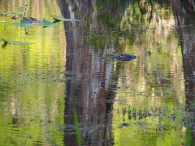Everglades_4e2