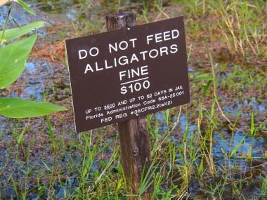 Everglades_4e3
