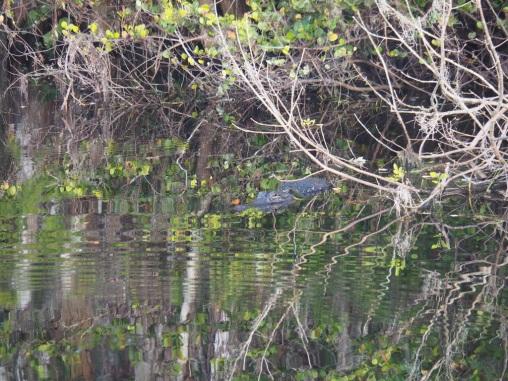 Everglades_4e7