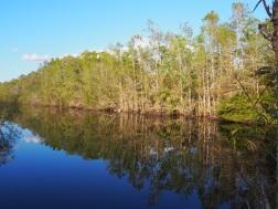 Everglades_4ef