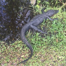Everglades_56d