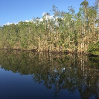 Everglades_591