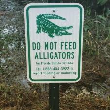 Everglades_61f