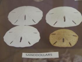 SanibelIsland_666