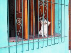 HavanaCentro_1c88b