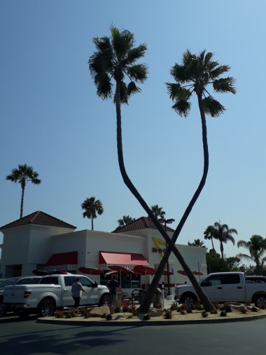 IN-n-Out-Burger1e6db