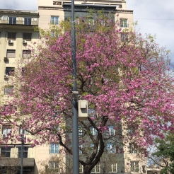 Frühling_1fa5e