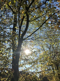 Herbst2018_1f878