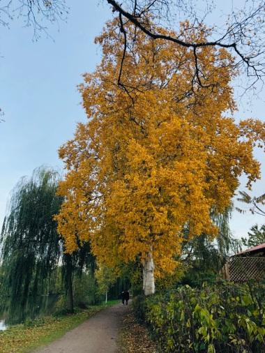 Herbst2018a
