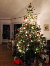 tannenbaum4
