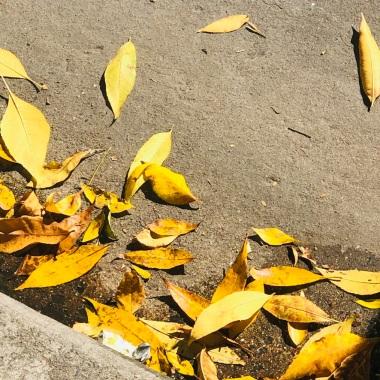 Herbst_2020b